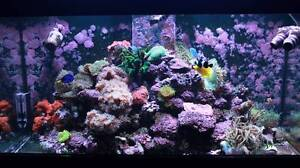 400L 4ft Marine Fish tank with Finding Dory Cast Fletcher Newcastle Area Preview