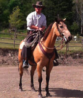 Colt Starting and Troubled Horse Training for Horses and Mules