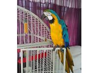 3 year old macaw parrot
