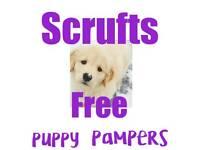 Scrufts Odstone dog grooming