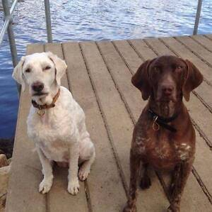 AUSTRALIAN PROFESSIONAL PET HOUSE SITTING Townsville Townsville City Preview