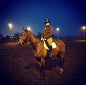 15.3 Thoroughbred Gelding For Part Loan