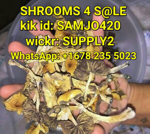 MUSHROOMS FOR SALE