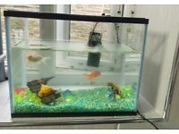 2 FISHS AND TANK FOR SALE