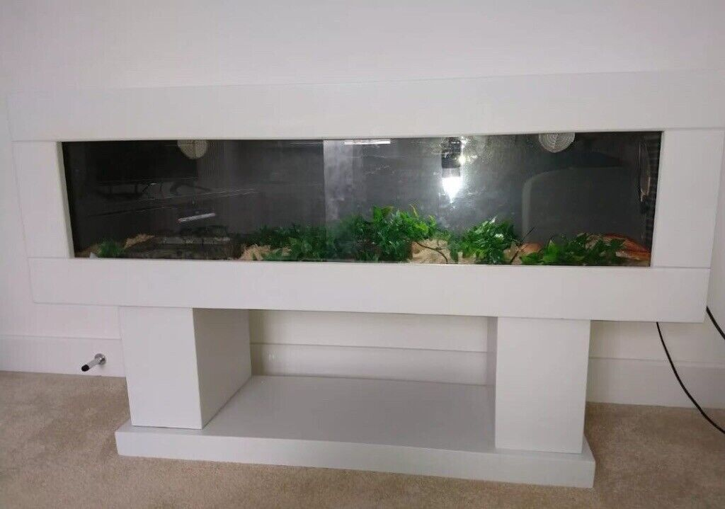 4 Year Old Corn Snake And Custom Vivarium In Bridgend Gumtree