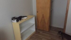 One bedroom in two bedroom apartment