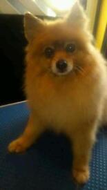 Dog Grooming Trainee seeks Models