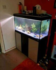 3 ft Aquarium + cabinet + ornaments + pump - Tropical/Cold