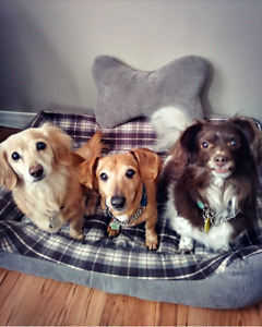 Flexible Dog Sitter Available For Overnight Stays