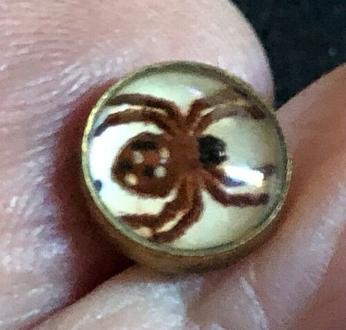 """AMAZING ITTY BITTY  Antique  Button---SPIDER-- UNDERGLASS, 3/8"""""""