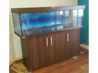 5ft Eheim vivaline tropical aquarium