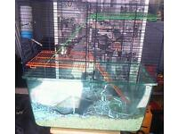Gerbils with cage