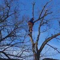 Arborist Services for Cape Breton, FREE ESTIMATES!