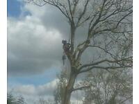 HOUSTON TREE SURGEONS AND LANDSCAPERS