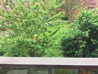 Spacious Double bedroom opposite Shoreditch Park