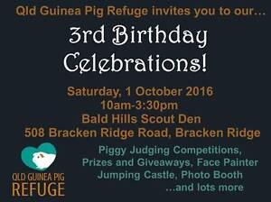 QLD GUINEA PIG REFUGE  3rd ANNIVERSARY OPEN DAY 1ST OCT 2016. Bracken Ridge Brisbane North East Preview