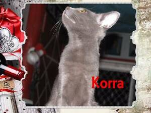 Korra - Soquilichi Rescue Ranch Childers Bundaberg Surrounds Preview
