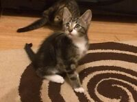 Adorable male kitten