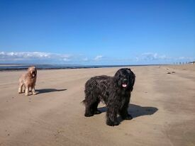 JUNE & JULY BARGAINS IN DEVON & CORNWALL - DOGS WELCOME - BEACHES - 2 POOLS - BAR - SURFING -CYCLING