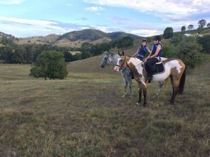 VERTICAL VALLEY EQUINE SERVICES
