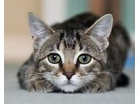 Fosterers for 2 cats desperately needed!