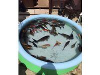 Various pond fish