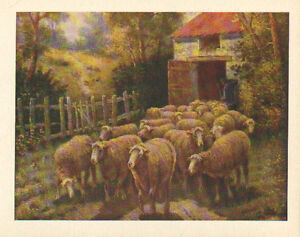 Sheep, Lamb, Shepherd, Leaving Barn, Vintage, Farm Scene, Antique, Art, Print,
