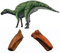 Dente Dinosauro Dal Becco D'anatra Edmontosaurus Annectens - Fossili Dinosauri - fossil - ebay.it