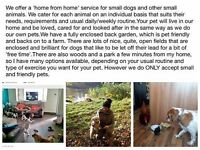HOME FROM HOME - Pet Sitting & Dog Boarding Service