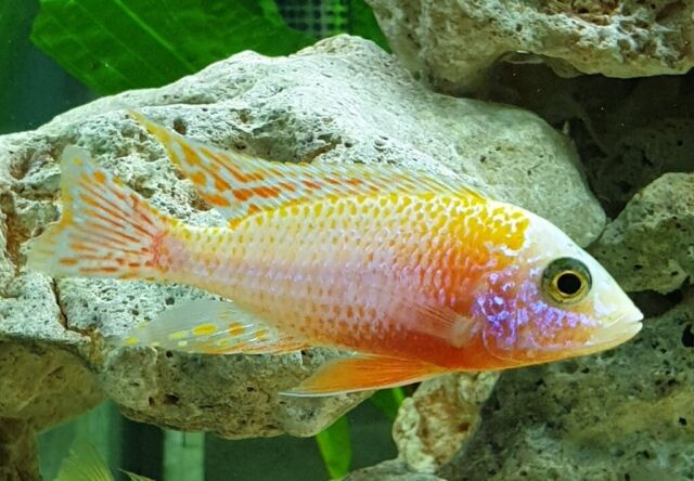 Tropical fish north London   in East Finchley, London   Gumtree
