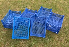 Blue stacking trays