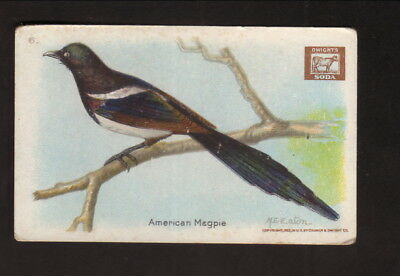 American Magpie  1922 Church   Dwight Useful Birds Of America Card