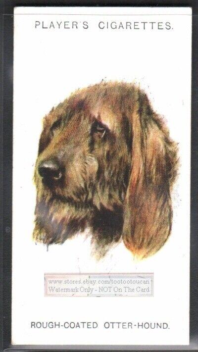 Rough Coated Otterhound Dog 75+ Y/O Ad Trade Card