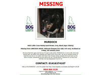 Missing blind dog with diabetes. Name Murdoch.