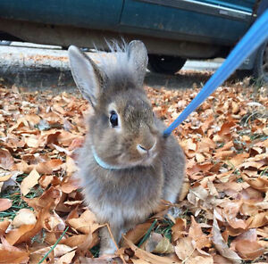 Looking for a male bunny