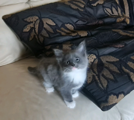 7 adorable, playful, happy and healthy kittens (ONLY 2 LEFT)
