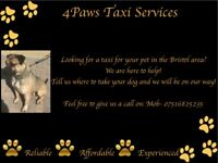 4Paws Taxi Service