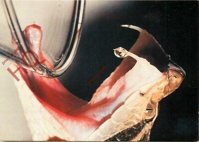 Picture Postcard>>Snakes, Lancehead Snake, Jararaca comprar usado  Enviando para Brazil