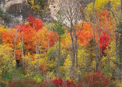 Art Note (10 Original Photographic Art Note Cards With Envelopes Logan Canyon)