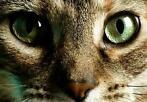 Kattenpension WEL VOOR DE POES