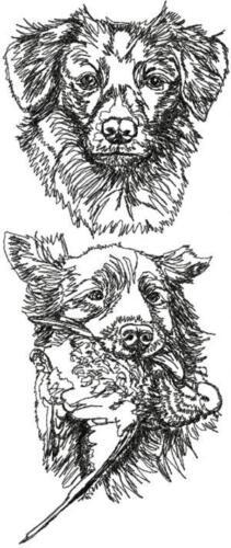 Nova Scotia Retriever Dog Personalize Embroidered Fleece Stadium Blanket Gift
