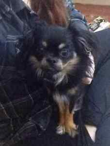 KLAWS:LOST! Coleman Lake/Kennisis Lake Rd West Guilford Kawartha Lakes Peterborough Area image 2