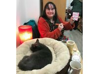 Fun Weekly Bingo Nights every Tuesday at the Westgate Ark Cat Cafe, Fenham, Ncle Upon Tyne