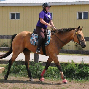 Calm, easy going gelding for part board