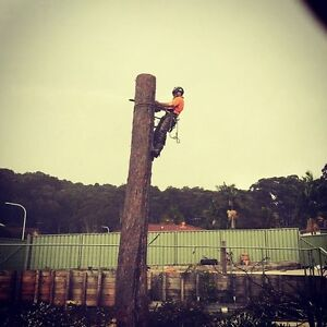 Jay's Tree Solutions Rankin Park Newcastle Area Preview