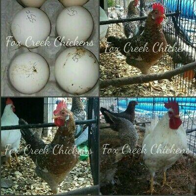 Mrs Grossman/'s GAME BIRDS Stickers STUDIO LINE TURKEY PHEASANT DUCK QUAIL NEW