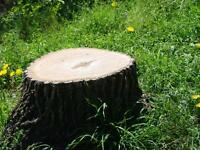 Tree Stump Removal - FREE ESTIMATES