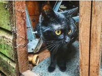Cat needs quiet loving forever home