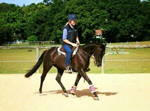 SW Horse Training/lessons Mudgeeraba Gold Coast South Preview