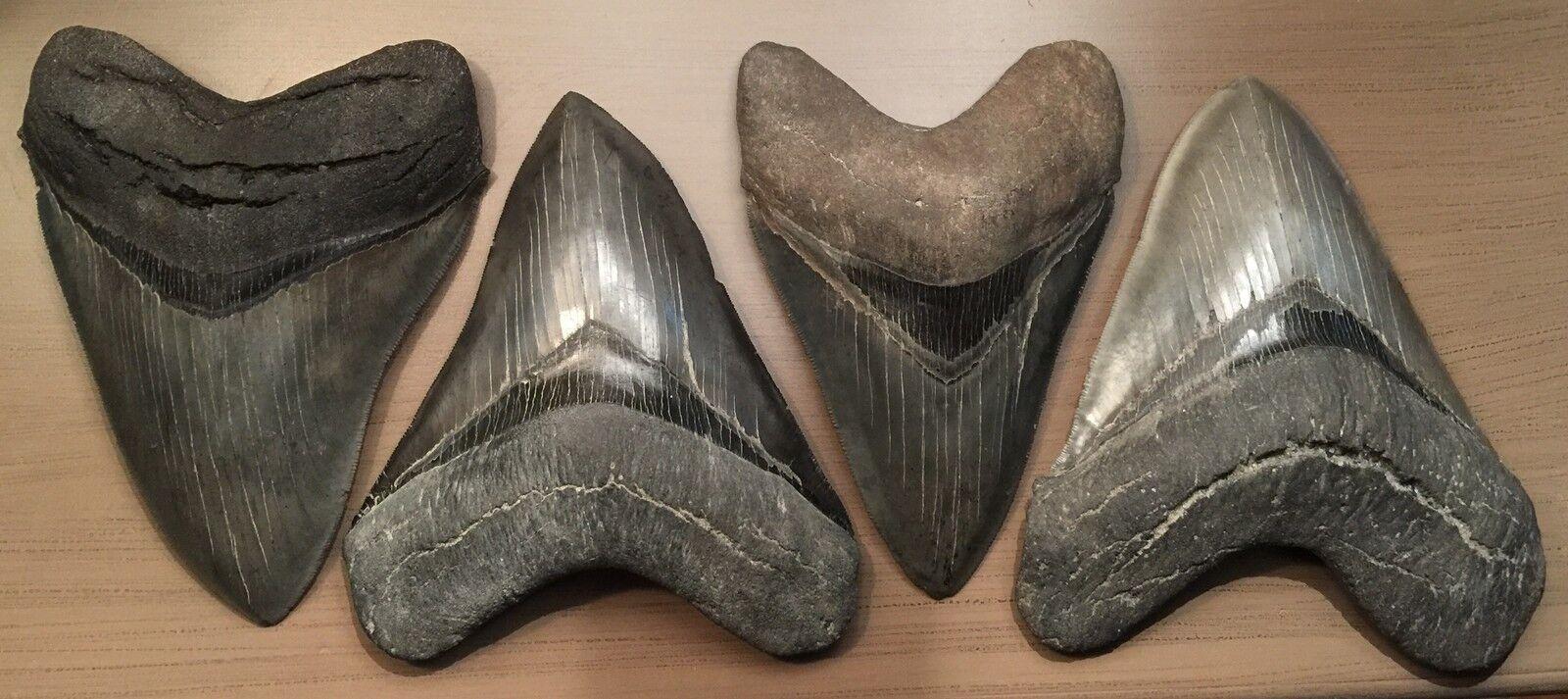 coastal-fossils